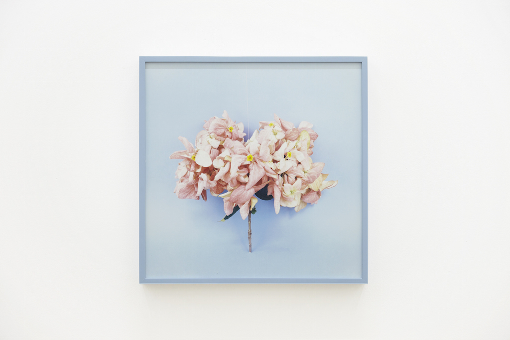 Sári Ember - Bouquet, 2013